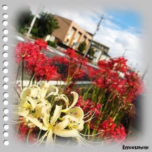 秋を楽しみながら、植物の変化を観察したら、心のエネルギーチャージできますよ♪