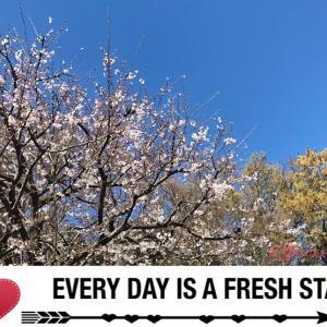 今年私が撮りためた桜の写真で、一緒にお花見しましょう♪