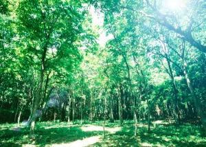 ウッド系の香りには、森林浴効果がありますよ!