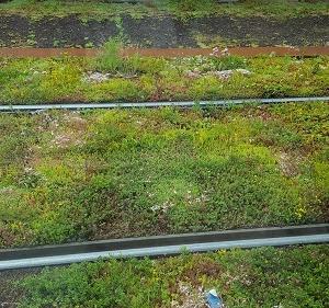 ミドリの線路