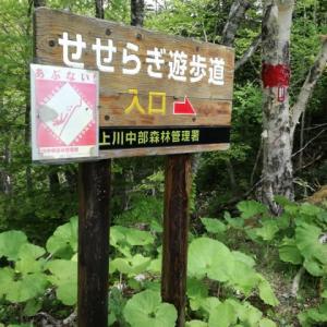 ビルケの森から青い池 2021/6/7