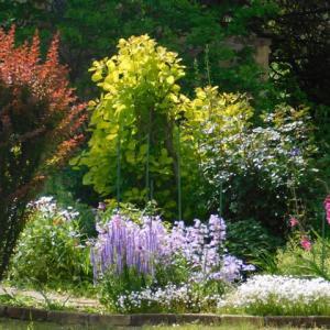 夏至の頃の庭