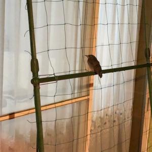 妻が雀になって家に帰ってきました