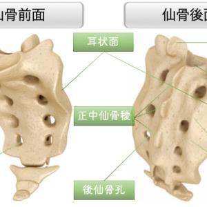 仙腸関節の特徴:なぜ骨盤はズレるのか。