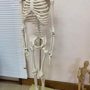 肋骨と骨盤の関係を目で見て、マーメードストレッチにチャレンジ。