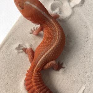 Albino Brick