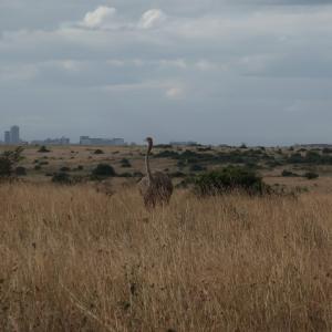 ナイロビ国立公園でサファリゲームドライブ体験!