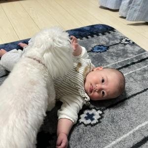 赤ちゃん大好きワンコ