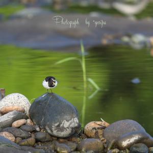-綺麗な水面- Beautiful water surface