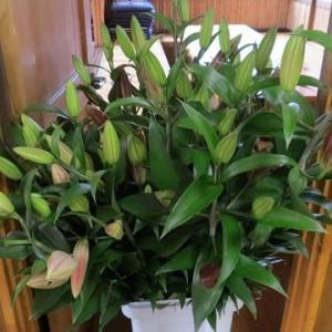 ユリの花が届いた