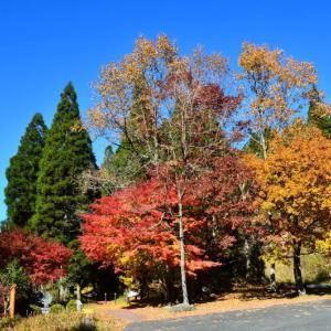 産山村から南小国町への紅葉も見頃でした。(2019年速報)