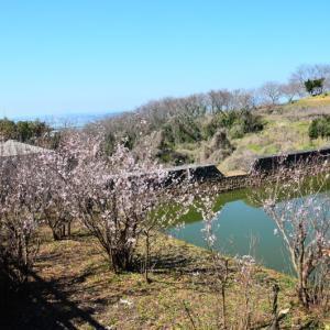 玉名市 草枕温泉てんすいの啓翁桜(2020年)