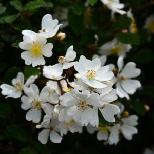 南阿蘇村 阿蘇パノラマライン・南登山道沿いの花