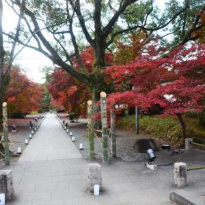 熊本市 旧細川刑部邸の紅葉(2020年-2)