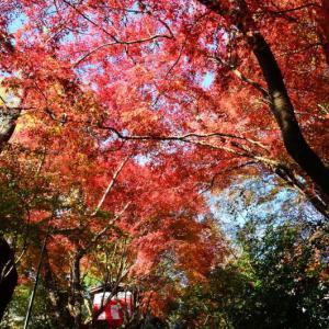 熊本市植木町 味取観世音瑞泉寺の紅葉(2020年-2)