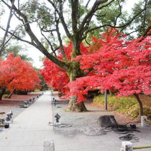 熊本市 旧細川刑部邸の紅葉(2020年-4)