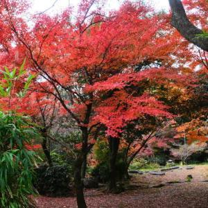 熊本市 島崎地区・叢桂園の紅葉(2020年-4)