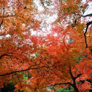 熊本市 島崎地区・釣耕園の紅葉(2020年-4)