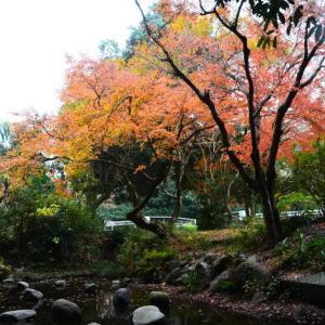 熊本市 島崎地区・少年の家跡地湧水池の紅葉(2020年-4)