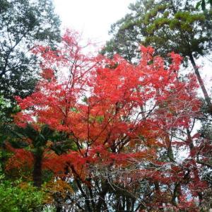 熊本市 島崎地区・三賢堂の紅葉(2020年-4)