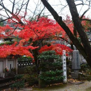 熊本市 島崎地区・岳林寺の紅葉
