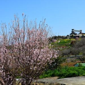 玉名市 「花の館」近くの啓翁桜(2021年)