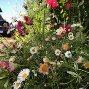 花の季節です