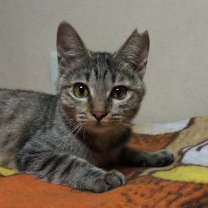 10月20日 日曜日『保護猫のずっとのお家探し里親会』参加猫さん紹介③どことなく個性的。