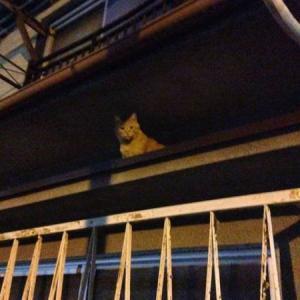 地域猫ひばりちゃんバイバイ。