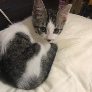 10月20日 日曜日『保護猫のずっとのお家探し里親会』参加猫さん紹介⑦子猫さんから熟女まで。