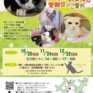 11月24日の日曜日は『保護猫のずっとのお家探し里親会』です。