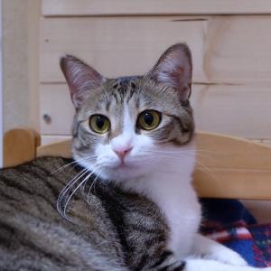 11月24日 日曜日『保護猫のずっとのお家探し里親会』参加猫紹介②A家の顔面偏差値高めの猫達。