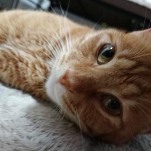 明日の土曜日は『保護猫のずっとのお家探し里親会』です。
