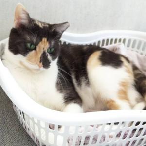 6月28日 日曜日『保護猫のずっとのお家探し里親会』参加猫紹介④寧々ちゃん親族チームNさんっち。