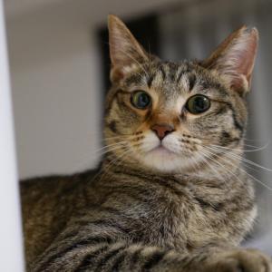 6月28日 日曜日『保護猫のずっとのお家探し里親会』参加猫紹介⑥キジキジきゃわたん姉妹。