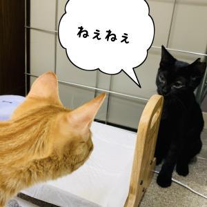 子猫がいきなり語り出す。