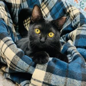 明日29日 日曜日『保護猫のずっとのお家探し里親会』日曜日編 参加猫紹介⑦annexメンバーだぜ。