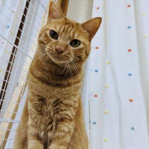 7月31日 土曜日『保護猫のずっとのお家探し里親会』参加猫紹介①。