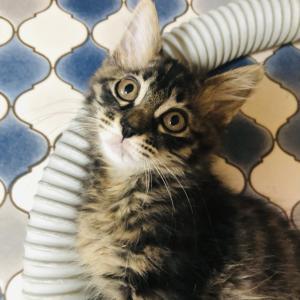 7月31日 土曜日『保護猫のずっとのお家探し里親会』参加猫紹介③とおさらい。