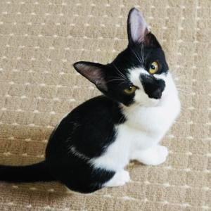 7月31日 土曜日『保護猫のずっとのお家探し里親会』参加猫紹介⑤とおさらい。