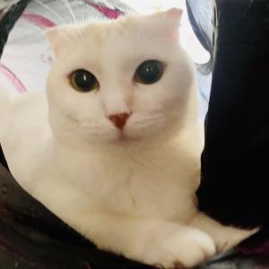 7月31日 土曜日『保護猫のずっとのお家探し里親会』参加猫紹介⑦とおさらい。
