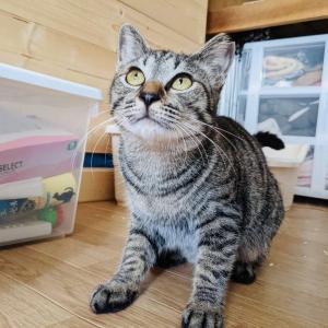 明日31日ですよ〜!『保護猫のずっとのお家探し里親会』。
