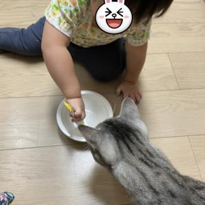 なっちゃん&妹ちゃん通信『チュール係りに任命する!』。