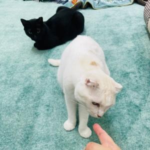 Megさんのお当番日記『笑いの神様をおんぶする猫』。