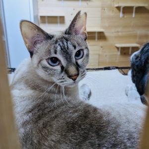 10月23日 土曜日『保護猫のずっとのお家探し里親会』参加猫紹介①。