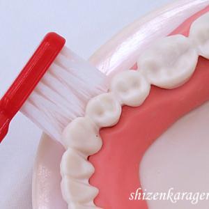 歯周病予防 歯と歯の境目の汚れをしっかり落とす  隅々までさっぱり! 歯科医院がおススメする歯ブラシ アルカトルネ