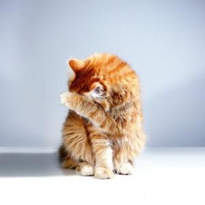 勧められても猫を飼えない理由