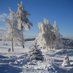 雪の日の診察
