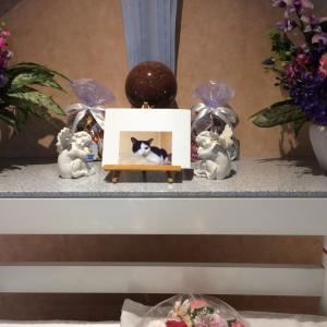 猫のお葬式