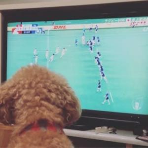 ラグビー日本ベスト8!!